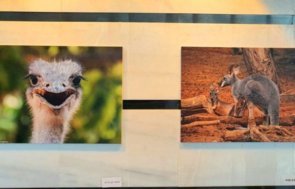 התושבים צילמו,ועכשיו תערוכת צילומי בעלי החיים בחי-כיף ראשון לציון