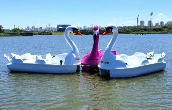 """טיילת דק לכל אורך הגדה,רחבת דשא לפיקניקים, מסעדות, קולנוע ועכשיו גם ברבורים באגם, עיריית ראשל""""צ תפעיל את סירות הפדלים באגם"""