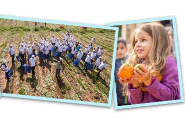 """הנכם מוזמנים ביום שישי להירתם למאמץ להצלת מזון ולהשתתף בקטיף חגיגי בראשל""""צ"""